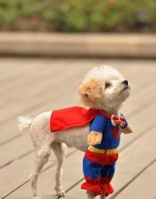 super-dog-2650-1396671638