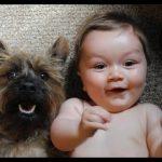 Cười bể bụng với hình ảnh các em bé bên động vật